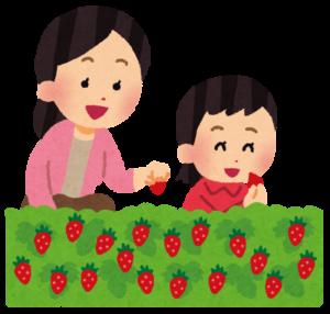 イチゴ狩り 親子