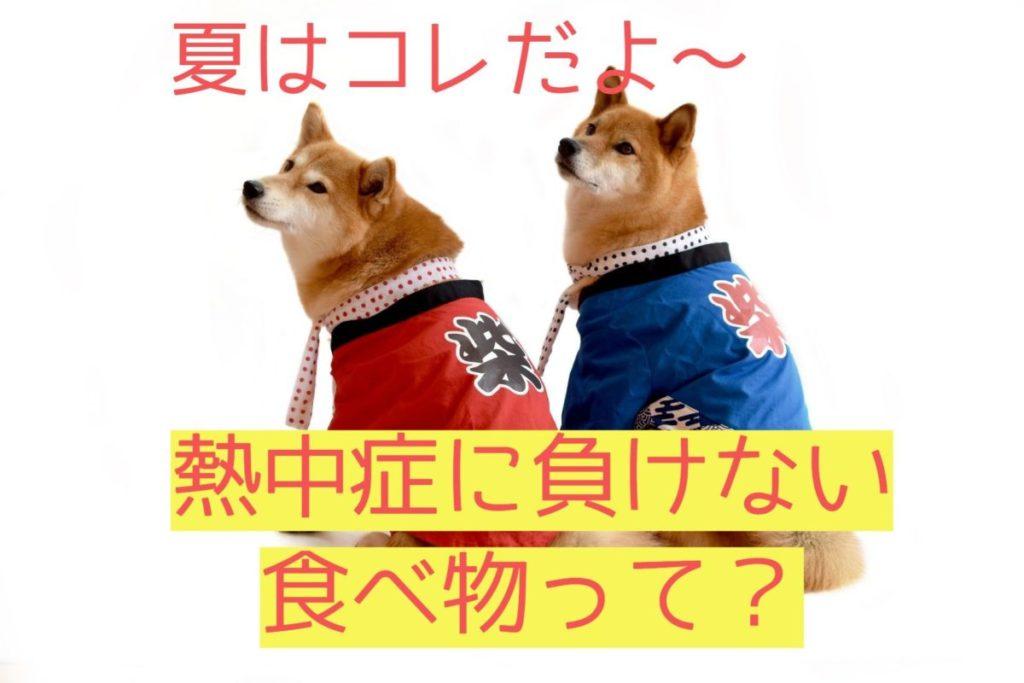 はっぴを着た柴犬