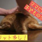 指圧される猫