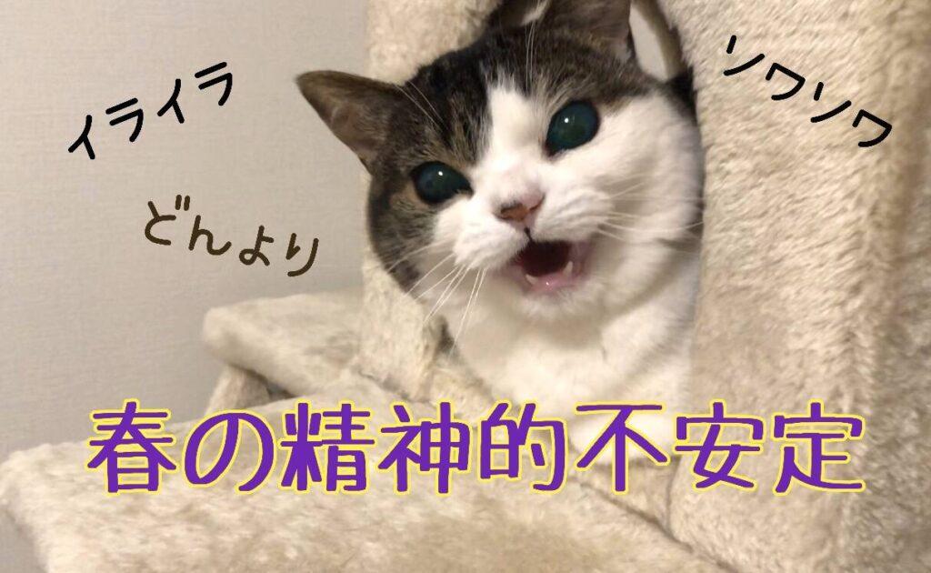 猫イライラ
